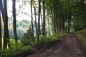 Amble Pie - track through Workmans Wood