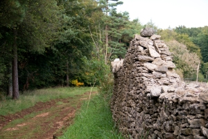 Amble Pie - footpath by the Cotswold Commons and Beechwoods National Nature Reserve