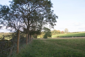 Amble Pie - fields by the Cotswold Commons and Beechwoods National Nature Reserve
